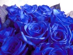 画像2: ご来店専用【日本での加工だからできる激安価格!!】人気の青バラ【ブルーローズ】10本花束4500円(1本あたり450円)