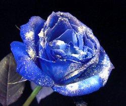 画像1: 【キラキラ☆ラメ仕様】人気の青バラ【ブルーローズ】20本キラキラ花束8600円