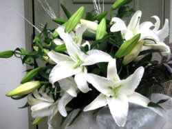 画像3: 大きな白百合の花束☆カサブランカ